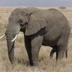 Oswajanie słonia, czyli jak miękkie umiejętności mogą przynieść twarde wyniki