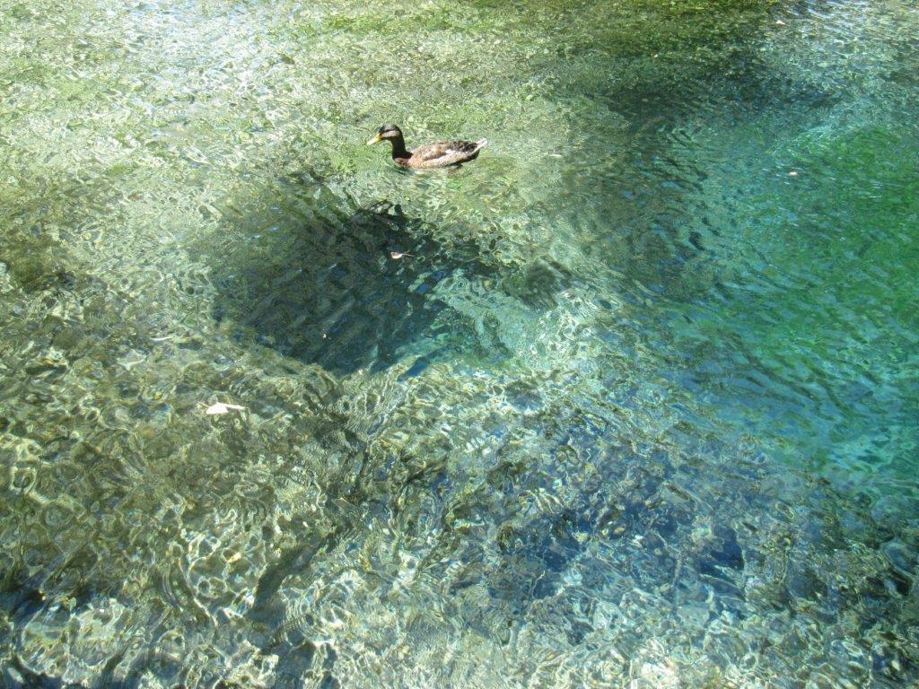 Poniżej kaczki znajduje się jedno zmiejsc, zktórychwypływa lodowata woda